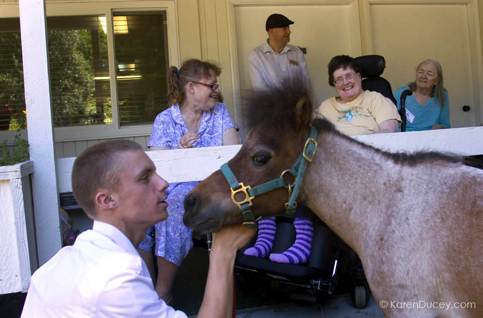 IMAGE: James Driscoll, left, talks with Milo, a dwarf miniature horse, while they visit with residents at the Park Ridge Skilled Nursing Center in Shoreline, Washington. (© KarenDucey.com)