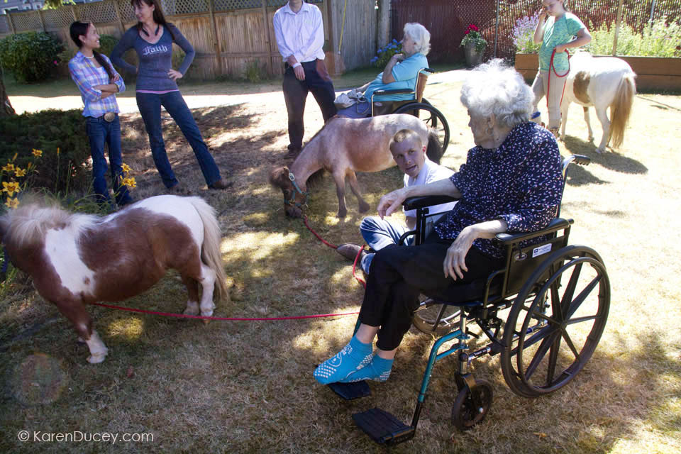 IMAGE: Miniature horses from Professional Equine Therapeutic visit with residents at the Park Ridge Skilled Nursing Center in Shoreline, Washington. (©karenducey.com)
