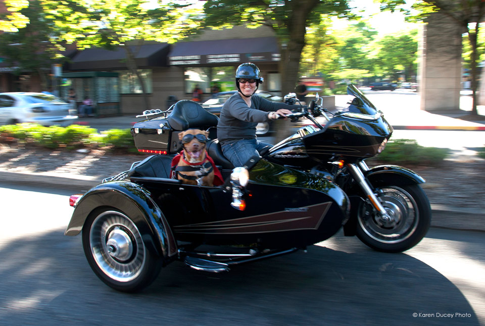 IMAGE: Pit Bull Mix, Lucy, Rides In A Liberty Sidecar Next To Her